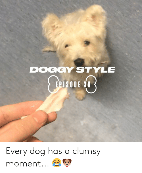 Clumsy: DOGGY STYLE  EPISODE 38 Every dog has a clumsy moment... 😂🐶