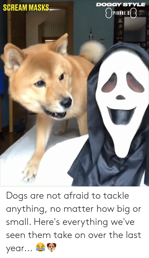 masks: DOGGY STYLE  SCREAM MASKS  PISODE 2 Dogs are not afraid to tackle anything, no matter how big or small. Here's everything we've seen them take on over the last year... 😂🐶