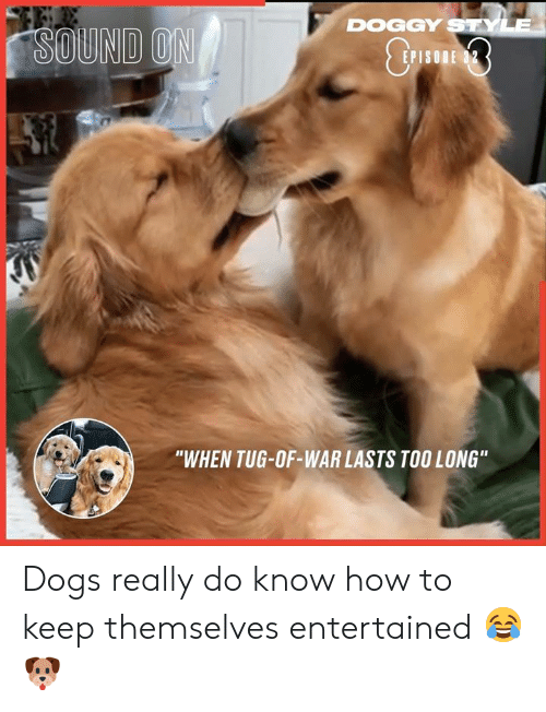 """tug: DOGGY STYLE  SOUND ON  E 32  P  """"WHEN TUG-OF-WAR LASTS TOO LONG"""" Dogs really do know how to keep themselves entertained 😂🐶"""