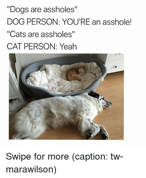 """Cat Person: """"Dogs are assholes""""  DOG PERSON: YOU'RE an asshole!  """"Cats are assholes""""  CAT PERSON: Yeah Swipe for more (caption: tw-marawilson)"""
