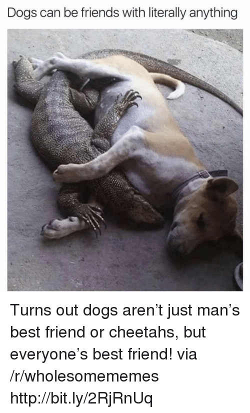 cheetahs: Dogs can be friends with literally anything Turns out dogs aren't just man's best friend or cheetahs, but everyone's best friend! via /r/wholesomememes http://bit.ly/2RjRnUq