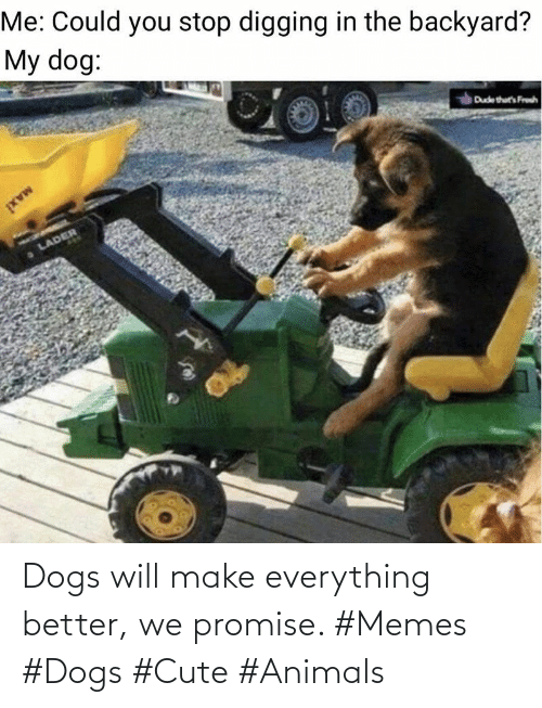 promise: Dogs will make everything better, we promise. #Memes #Dogs #Cute #Animals