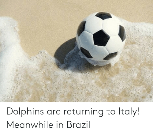 Brazil: Dolphins are returning to Italy! Meanwhile in Brazil