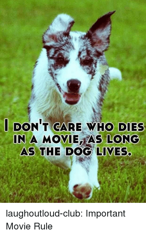 Club, Tumblr, and Blog: DON T CARE WHO DIES  IN A MOVIE AS LONG  AS THE DOG LIVES laughoutloud-club:  Important Movie Rule