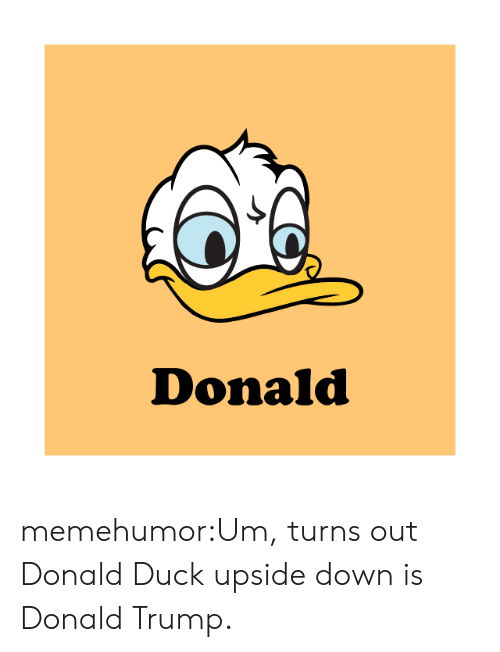 Donald Trump, Tumblr, and Blog: Donald memehumor:Um, turns out Donald Duck upside down is Donald Trump.
