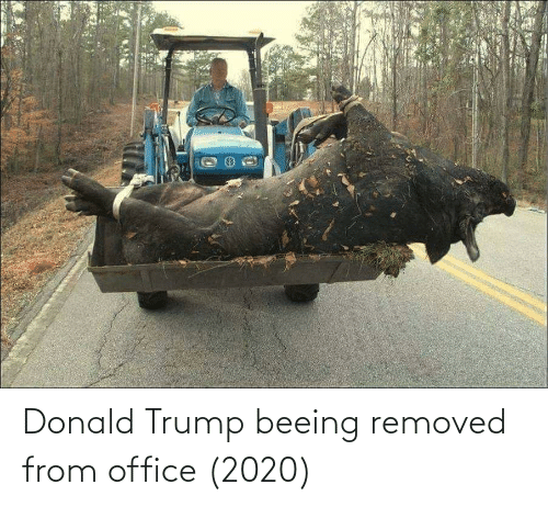 Donald Trump: Donald Trump beeing removed from office (2020)
