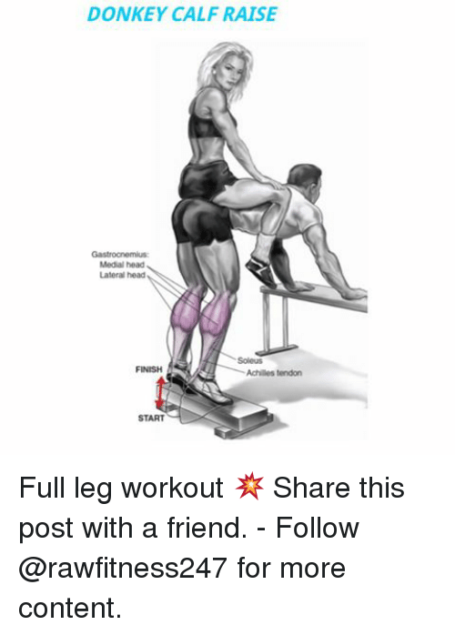 Donkey, Head, and Memes: DONKEY CALF RAISE  Medial head  Lateral head  Achilles tendon  START Full leg workout 💥 Share this post with a friend. - Follow @rawfitness247 for more content.
