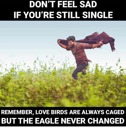 love bird: DONT FEEL SAD  IF YOU'RE STILL SINGLE  A-  REMEMBER, LOVE BIRDS ARE ALWAYS CAGED  BUT THE EAGLE NEVER CHANGED  h