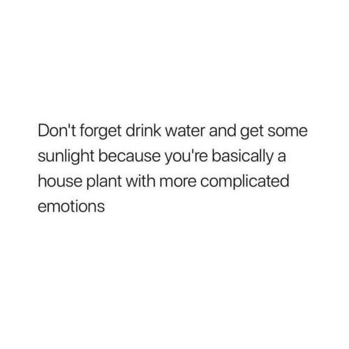House, Water, and Sunlight: Don't forget drink water and get some  sunlight because you're basically a  house plant with more complicated  emotions
