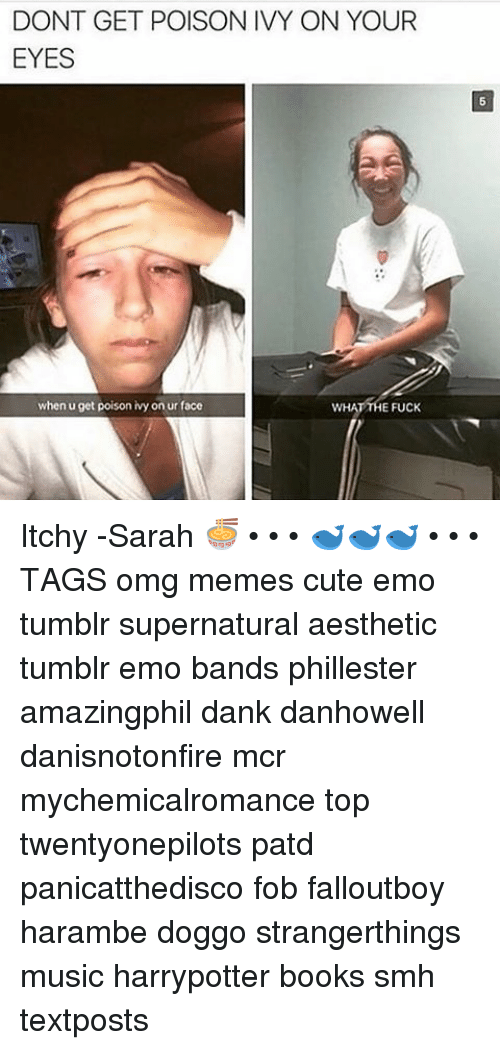 Harambism: DONT GET POISON IVY ON YOUR  EYES  when u get poison ivy on ur face  E FUCK Itchy -Sarah 🍜 • • • 🐋🐋🐋 • • • TAGS omg memes cute emo tumblr supernatural aesthetic tumblr emo bands phillester amazingphil dank danhowell danisnotonfire mcr mychemicalromance top twentyonepilots patd panicatthedisco fob falloutboy harambe doggo strangerthings music harrypotter books smh textposts