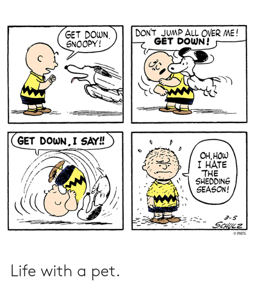 Life, Memes, and Snoopy: DONT JUMP ALL OVER ME!  GET DOWN  SNOOPY!  GET DOWN!  GET DOWN.I SAY!!  OH,HOW  I HATE  THE  SHEDDING  SEASON!  PNTS Life with a pet.
