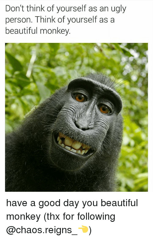 beautifull: Don't think of yourself as an ugly  person. Think of yourself as a  beautiful monkey. have a good day you beautiful monkey (thx for following @chaos.reigns_👈)