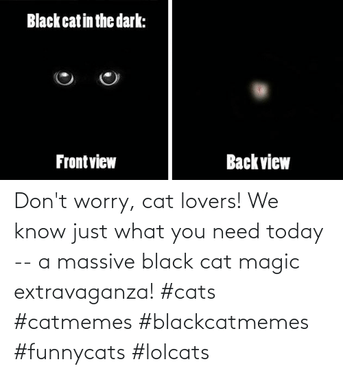 worry: Don't worry, cat lovers! We know just what you need today -- a massive black cat magic extravaganza! #cats #catmemes #blackcatmemes #funnycats #lolcats