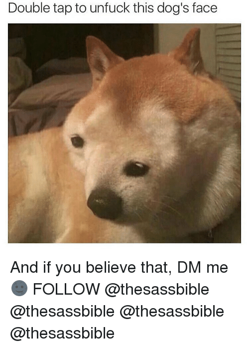 Memes, 🤖, and Dog Face: Double tap to unfuck this dog's face And if you believe that, DM me 🌚 FOLLOW @thesassbible @thesassbible @thesassbible @thesassbible