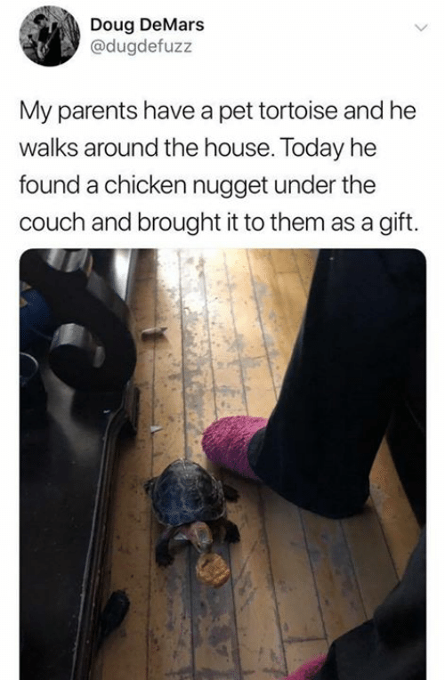 nugget: Doug DeMars  @dugdefuzz  My parents have a pet tortoise and he  walks around the house. Today he  found a chicken nugget under the  couch and brought it to them as a gift.