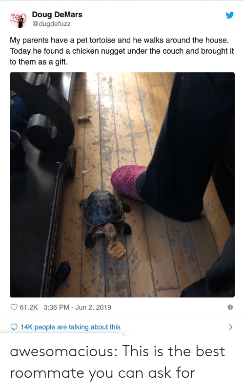nugget: Doug DeMars  @dugdefuzz  My parents have a pet tortoise and he walks around the house.  Today he found a chicken nugget under the couch and brought it  to them as a gift.  61.2K 3:36 PM Jun 2, 2019  14K people are talking about this awesomacious:  This is the best roommate you can ask for