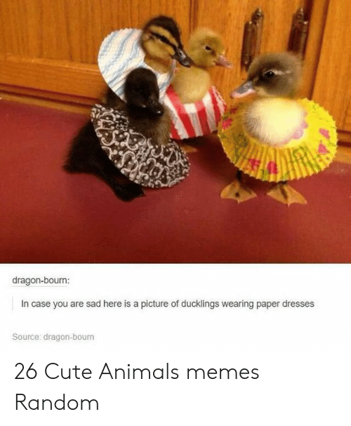 Animals Memes: dragon-bourn:  In case you are sad here is a picture of ducklings wearing paper dresses  Source: dragon-bourn 26 Cute Animals memes Random