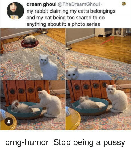 A Pussy: dream ghoul @TheDreamGhoul  my rabbit claiming my cat's belongings  and my cat being too scared to do  anything about it: a photo series omg-humor:  Stop being a pussy