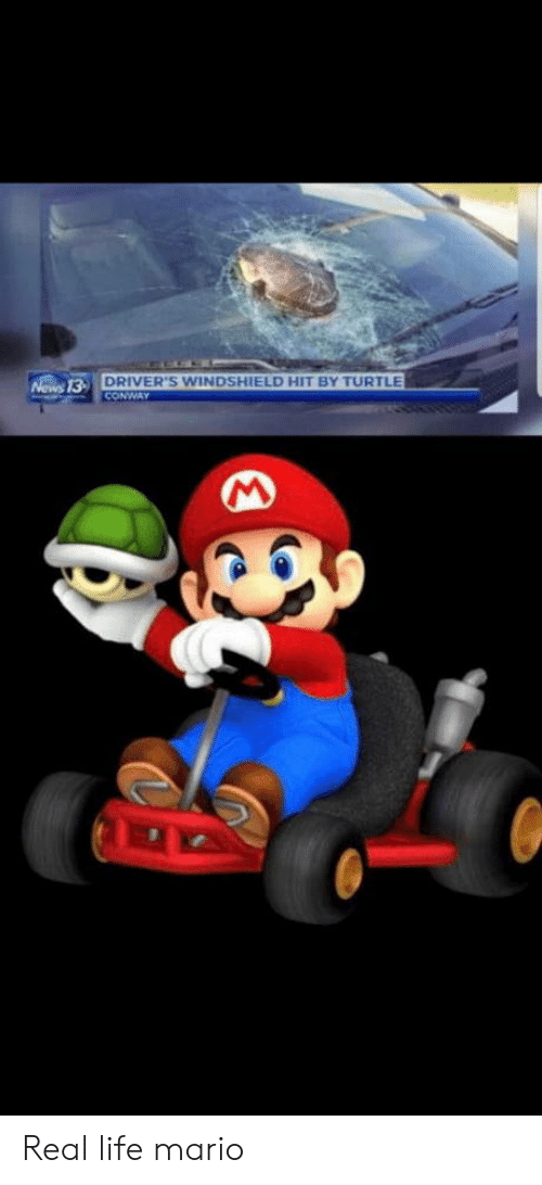 Conway, Life, and Mario: DRIVER'S WINDSHIELD HIT BY TURTLE  CONWAY  Nows 13- Real life mario
