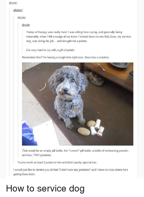 """pll: drovie:  afkland  drovie  drovie  Today at therapy was really hard. I was sitting here crying, and generally being  miserable, when I felt a nudge at my knee. I looked down to see that Zeus, my service  dog, was doing his job.. and brought me a potato  it is very hard to cry with a gift of potato.  Remember this? I'm having a rough time right now. Zeus has a solution  That would be an empty pll bottle, the """"correct pill bottle, a bottle of embossing powder  and two, TWO potatoes.  You're worth at least 2 potato to him and that's pretty special imo.  I would just like to remind you all that """"I don't own any potatoes and I have no clue where he's  getting them from. How to service dog"""