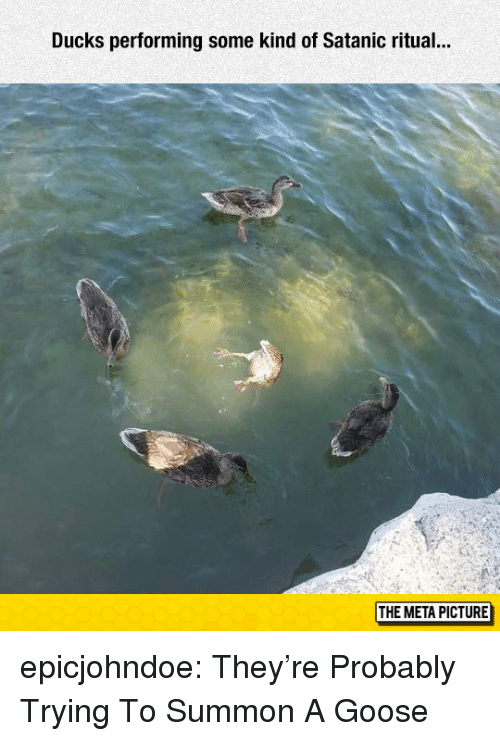 satanic: Ducks performing some kind of Satanic ritual..  THE META PICTURE epicjohndoe:  They're Probably Trying To Summon A Goose