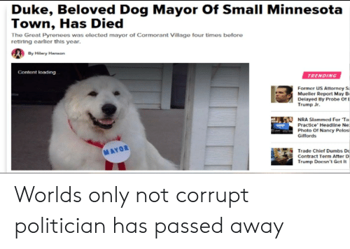 D Trump: Duke, Beloved Dog Mayor Of Small Minnesota  Town, Has Died  The Great Pyrenees was elected mayor of Cormorant Village four times before  retiring earller this year  By Hilmry Hmson  Content loading  TRENDING  Former US Attorncy S  Mueller Report May B  Delayed By Probe of  Trump Jr.  NRA Slammed For Ta  Practice' Headline Ne:  Photo Of Nancy Pelosi  Giffords  MAYOR  Trade  Chief Dumbs D  Contract Term Atter D  Trump Doesn't Gct It Worlds only not corrupt politician has passed away