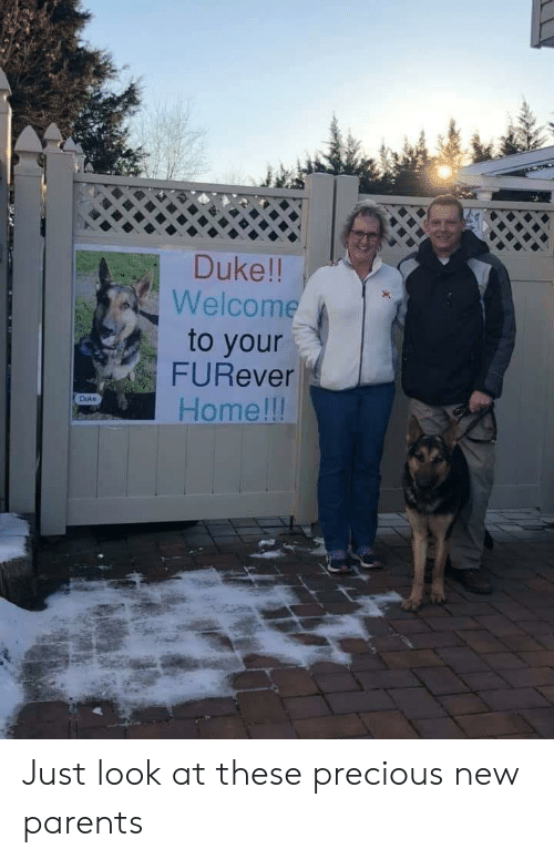 Parents, Precious, and Duke: Duke!!  Welcome  to your  FURever  Home lll  Duke Just look at these precious new parents