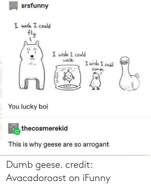 geese: Dumb geese. credit: Avacadoroast on iFunny