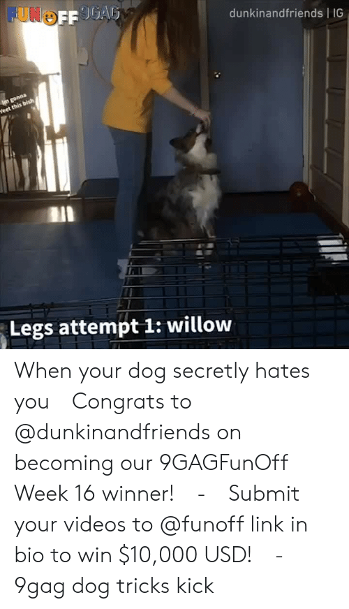 9gag, Memes, and Videos: dunkinandfriends IG  Legs attempt 1: willow When your dog secretly hates you⠀ Congrats to @dunkinandfriends on becoming our 9GAGFunOff Week 16 winner!⠀ -⠀ Submit your videos to @funoff link in bio to win $10,000 USD!⠀ -⠀ 9gag dog tricks kick
