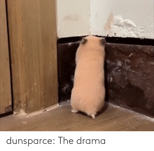 drama: dunsparce: The drama