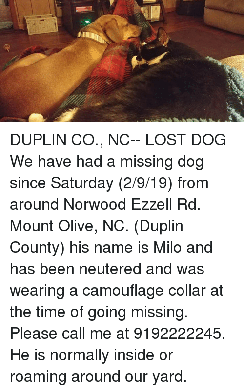 Memes, Lost, and Time: DUPLIN CO., NC-- LOST DOG  We have had a missing dog since Saturday (2/9/19) from around Norwood Ezzell Rd. Mount Olive, NC. (Duplin County) his name is Milo and has been neutered and was wearing a camouflage collar at the time of going missing. Please call me at 9192222245. He is normally inside or roaming around our yard.