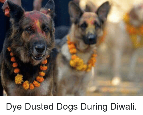 Dogs, Diwali, and During