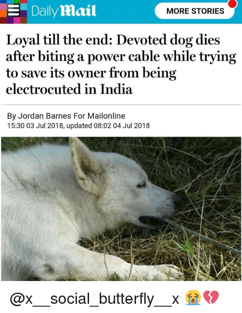 electrocuted: E DailyMmail  MORE STORIES  Loyal till the end: Devoted dog dies  after biting a power cable while trying  to save its owner from being  electrocuted in India  By Jordan Barnes For Mailonline  15:30 03 Jul 2018, updated 08:02 04 Jul 2018 @x__social_butterfly__x 😭💔