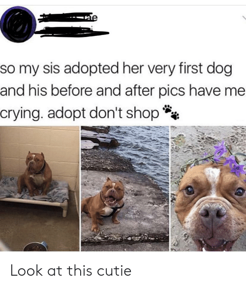 Crying, Her, and Dog: e  so my sis adopted her very first dog  and his before and after pics have me  crying. adopt don't shop Look at this cutie