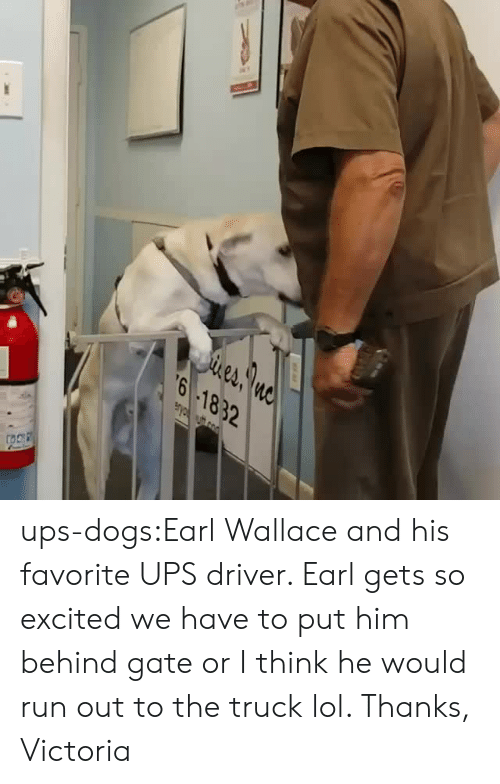 Dogs, Lol, and Run: eA  6 1832 ups-dogs:Earl Wallace and his favorite UPS driver. Earl gets so excited we have to put him behind gate or I think he would run out to the truck lol. Thanks, Victoria