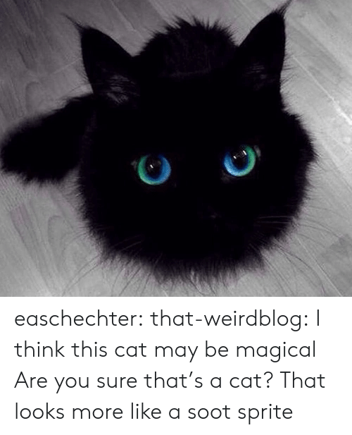 Target, Tumblr, and Blog: easchechter: that-weirdblog:  I think this cat may be magical  Are you sure that's a cat? That looks more like a soot sprite