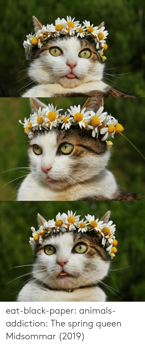 Black: eat-black-paper:  animals-addiction: The spring queen   Midsommar (2019)