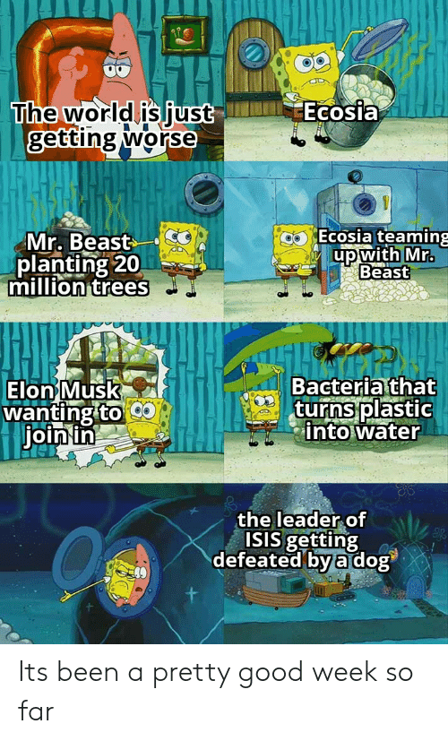 Isis, Good, and Trees: Ecosia  The world is just  getting worse  Ecosia teaming  Mr. Beast  planting 20  million trees  up with Mr.  Beast  Bacteria that  turns plastic  into water  Elon Musk  wanting to  join in  the leader of  ISIS getting  defeated by a dog Its been a pretty good week so far