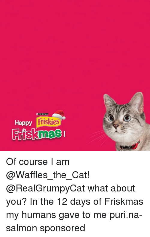 Waffling: EEPURINA  Friskies  Happy  Frisknnas Of course I am @Waffles_the_Cat! @RealGrumpyCat what about you? In the 12 days of Friskmas my humans gave to me puri.na-salmon sponsored