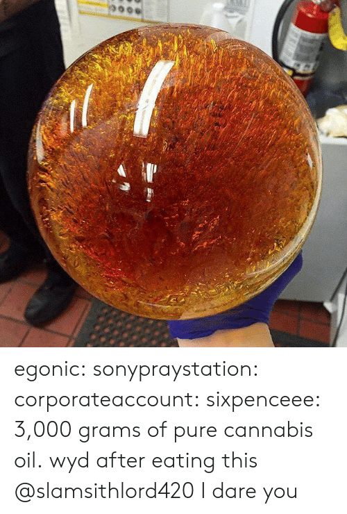 Tumblr, Wyd, and Blog: egonic:   sonypraystation:  corporateaccount:  sixpenceee:  3,000 grams of pure cannabis oil.  wyd after eating this    @slamsithlord420 I dare you