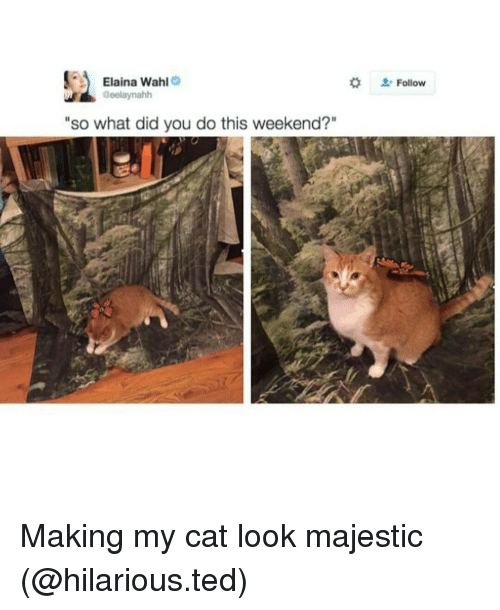 """Cat Look: Elaina Wahl  e  aeelaynahh  """"so what did you do this weekend?""""  Follow Making my cat look majestic (@hilarious.ted)"""