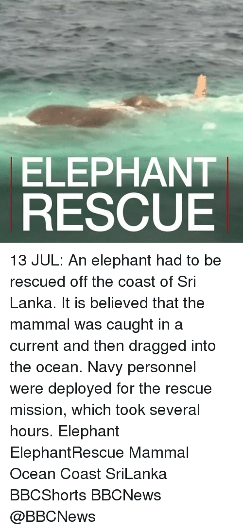 oceaneering: ELEPHANT  RESCUE 13 JUL: An elephant had to be rescued off the coast of Sri Lanka. It is believed that the mammal was caught in a current and then dragged into the ocean. Navy personnel were deployed for the rescue mission, which took several hours. Elephant ElephantRescue Mammal Ocean Coast SriLanka BBCShorts BBCNews @BBCNews