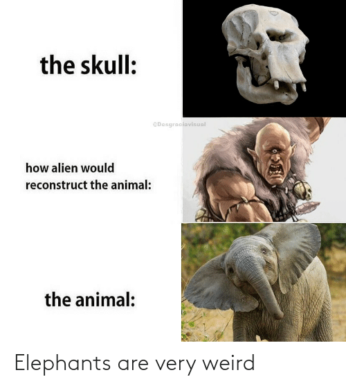 weird: Elephants are very weird