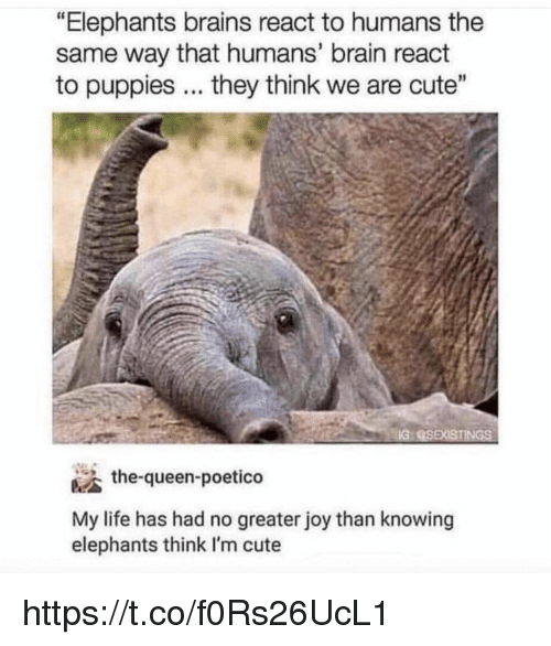 """Brains, Cute, and Life: """"Elephants brains react to humans the  same way that humans' brain react  to puppies. they think we are cute""""  IG  the-queen-poetico  My life has had no greater joy than knowing  elephants think I'm cute https://t.co/f0Rs26UcL1"""