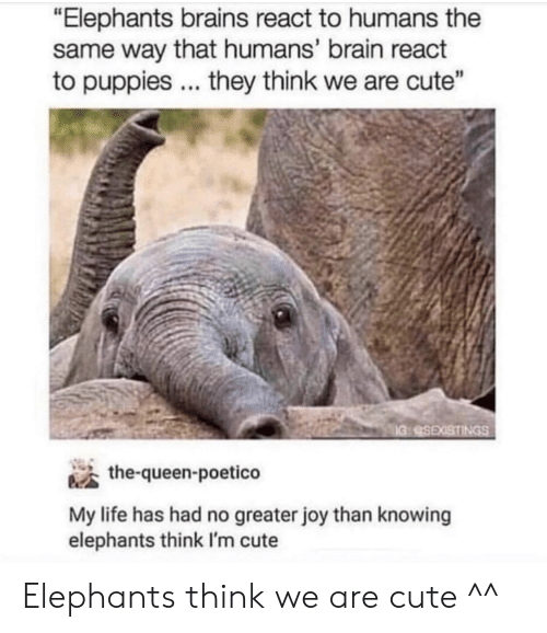 "Brains, Cute, and Life: ""Elephants brains react to humans the  same way that humans' brain react  to puppies they think we are cute""  the-queen-poetico  My life has had no greater joy than knowing  elephants think I'm cute Elephants think we are cute ^^"