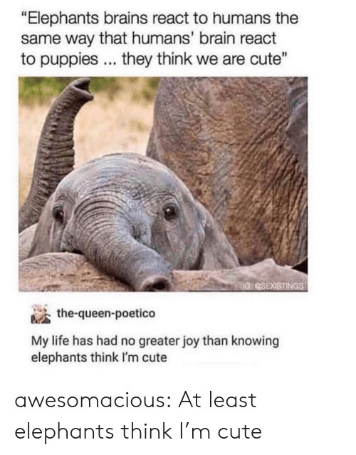 "brains: ""Elephants brains react to humans the  same way that humans' brain react  to puppies... they think we are cute""  IG:SEXISTINGS  the-queen-poetico  My life has had no greater joy than knowing  elephants think I'm cute awesomacious:  At least elephants think I'm cute"