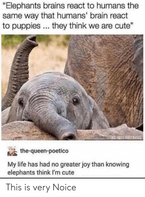 "cute: ""Elephants brains react to humans the  same way that humans' brain react  to puppies .. they think we are cute""  IG QSEXISTINGS  the-queen-poetico  My life has had no greater joy than knowing  elephants think I'm cute This is very Noice"