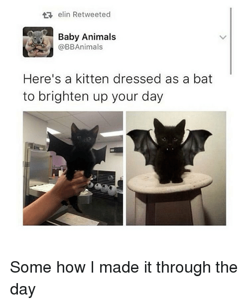 Baby Animal: elin Retweeted  Baby Animals  @BB Animals  Here's a kitten dressed as a bat  to brighten up your day Some how I made it through the day
