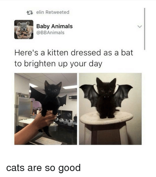 Baby Animal: elin Retweeted  Baby Animals  @BB Animals  Here's a kitten dressed as a bat  to brighten up your day cats are so good