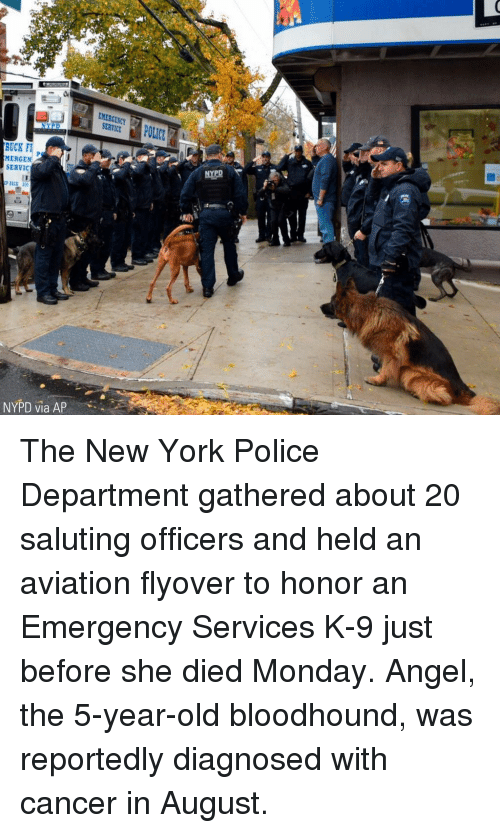 Nypd: EMERGENCY  SERVICE  RUCK F  MERGEN  SERVIC  50  NYPD via AP The New York Police Department gathered about 20 saluting officers and held an aviation flyover to honor an Emergency Services K-9 just before she died Monday. Angel, the 5-year-old bloodhound, was reportedly diagnosed with cancer in August.